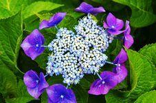 紫陽花-1.jpg